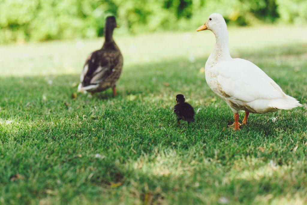 Feeding the ducks for outdoor activities